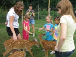 Guests with fawns