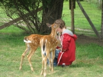 Guest with fawns
